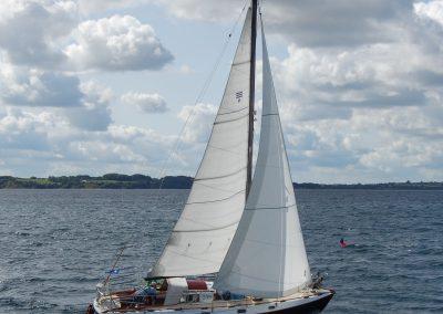 DSC_4605-Skjold